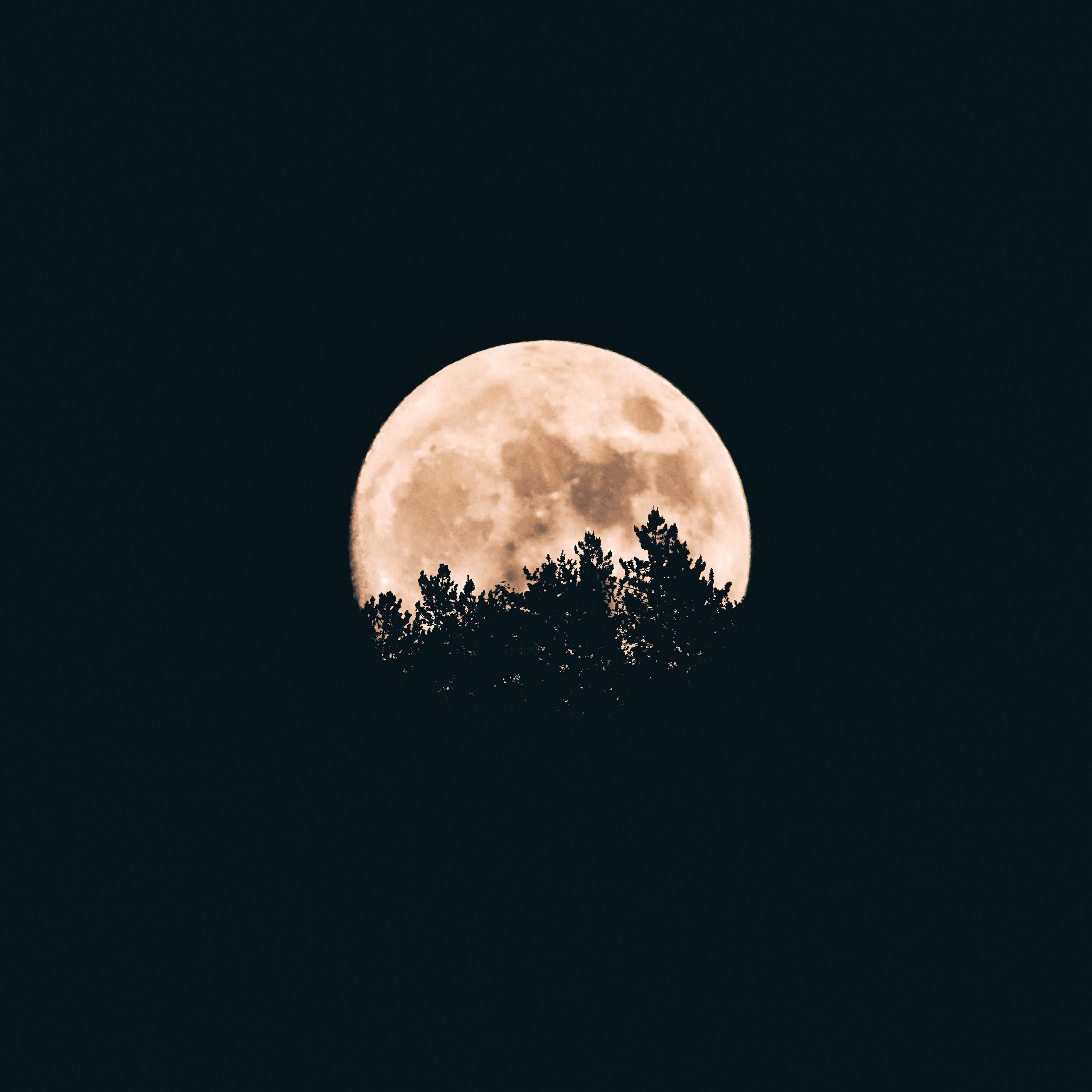 2780x2780 Wallpaper moon, trees, dark, night