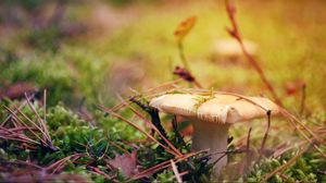 Preview wallpaper mushroom, grass, autumn, dry