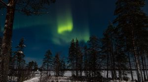 Preview wallpaper northern lights, aurora, winter, forest, night, trees, sky