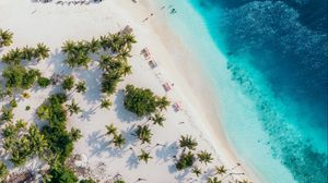Preview wallpaper ocean, aerial view, coast, palm, sand