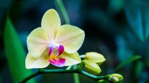 Preview wallpaper orchid, flower, bud, petals