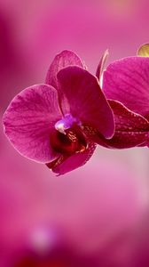 Preview wallpaper orchid, flower, petals, pink