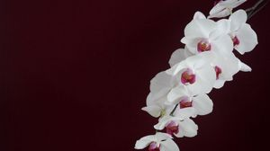 Preview wallpaper orchid, white, branch, background