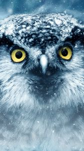 Preview wallpaper owl, bird, eyes, looks, closeup, predator, wildlife