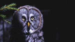 Preview wallpaper owl, bird, looks, shadow, predator, feathered