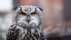 Preview wallpaper owl, bird, predator, look, feathers