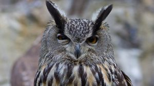 Preview wallpaper owl, bird, predator, eyes