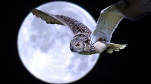 Preview wallpaper owl, bird, predator, moon, flight