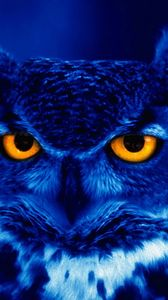 Preview wallpaper owl, predator, bird, night, yellow eyes