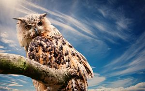 Preview wallpaper owl, predator, bird, sky