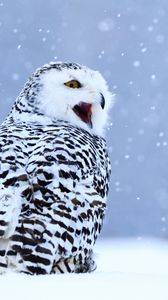 Preview wallpaper owl, white owl, polar owl, bird, snow, winter