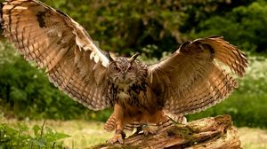 Preview wallpaper owl, wings, flapping, predator