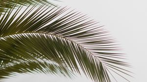 Preview wallpaper palm, branch, leaves, carved, minimalism