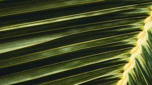 Preview wallpaper palm, leaf, branch, green, macro