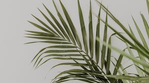 Preview wallpaper palm, leaves, minimalism, plant, green