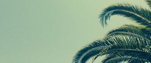 Preview wallpaper palm, tree, branch, tropics