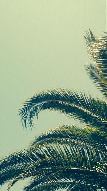 360x640 Wallpaper palm, tree, branch, tropics
