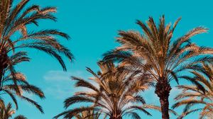 Preview wallpaper palm trees, genoa, italy