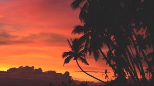 Preview wallpaper palm trees, sunset, clouds, tropics, sky