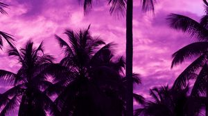 Preview wallpaper palm trees, sunset, tropics, purple, sky