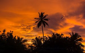 Preview wallpaper palm trees, sunset, tropics, sky, clouds