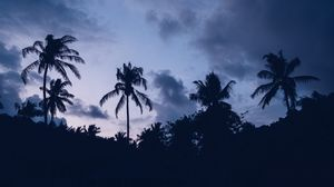Preview wallpaper palms, night, clouds