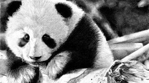 Preview wallpaper panda, color, face, black and white