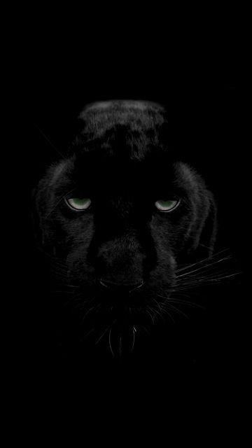 360x640 Wallpaper panther, predator, big cat, wildlife, look