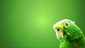 Preview wallpaper parrot, bird, beak, background