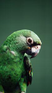 Preview wallpaper parrot, bird, green, wildlife