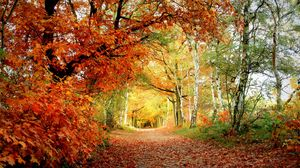 Preview wallpaper path, autumn, trees, oak, birches, leaves