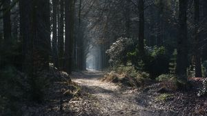 Preview wallpaper path, fog, trees, arch