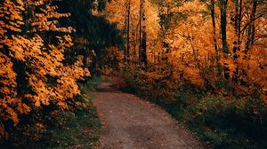 Preview wallpaper path, forest, autumn, trees, nature