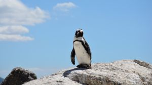 Preview wallpaper penguin, rocks, sky, shadow