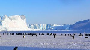 Preview wallpaper penguins, antarctica, snow, ice floe