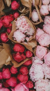 Preview wallpaper peonies, flowers, bouquets, pink, red