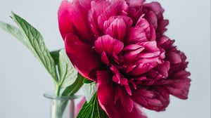 Preview wallpaper peony, flower, pink, vase, glass