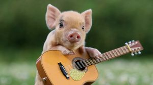 Preview wallpaper pig, little pig, guitar