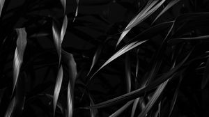 Preview wallpaper plant, leaves, black, bw