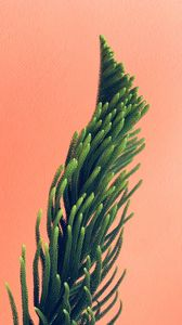 Preview wallpaper plant, needles, branches, minimalism, wall