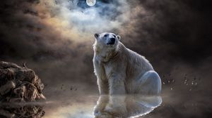 Preview wallpaper polar bear, ocean, reflection, mammal