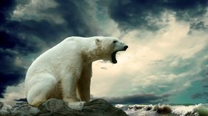 Preview wallpaper polar bear, sitting, thick