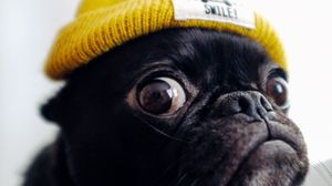Preview wallpaper pug, dog, hat, funny, pet