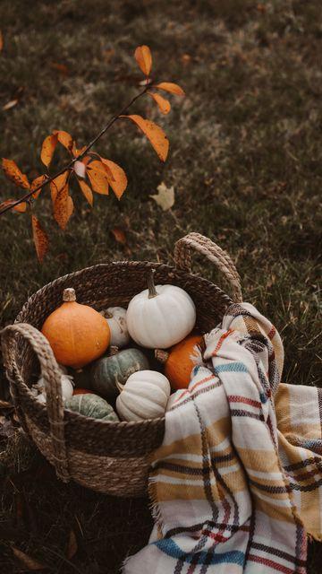 360x640 Wallpaper pumpkin, basket, plaid, autumn, harvest