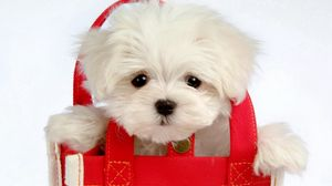 Preview wallpaper puppy, baby, bag, coat, face
