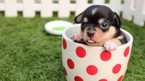 ... Preview wallpaper puppy, dog, cup