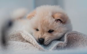 Preview wallpaper puppy, dog, cute, fluffy, pet