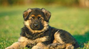 Preview wallpaper puppy, dog, grass