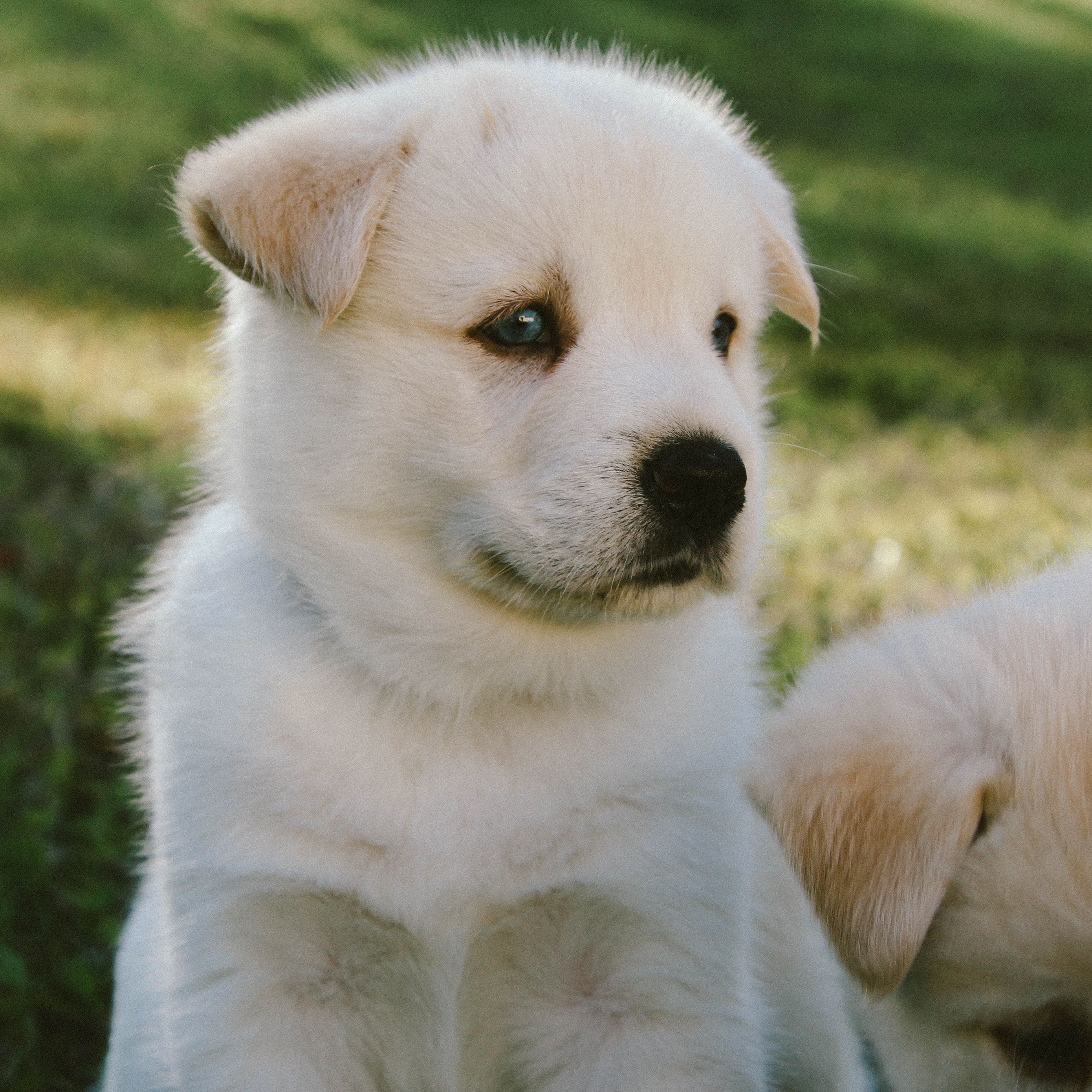 2780x2780 Wallpaper puppy, dog, muzzle, cute