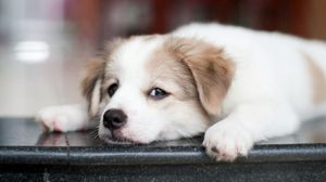 Preview wallpaper puppy, dog, muzzle, eyes, sad